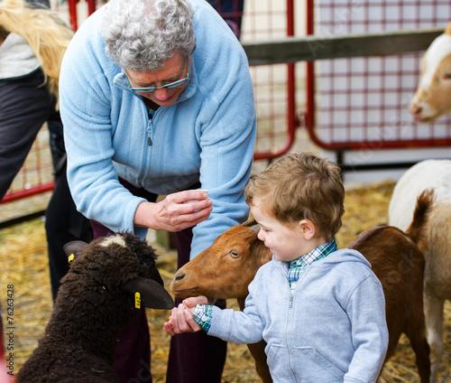 Boy and Grandmother Feeding Animals - 76263428