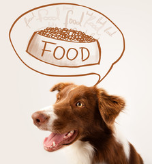 Cute border collie dreaming about food