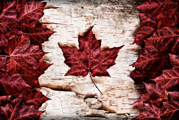 Canadian Flag made out of real Maple Leaves on a birch bark