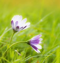 flores entre la hierba