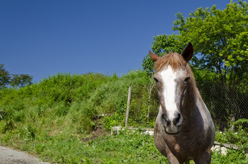 Horse on the road in the summer day in the countryside