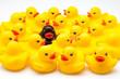 grupo de patos de goma - 76266254