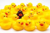 grupo de patos de goma