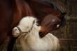Pferdeliebe - 76267618