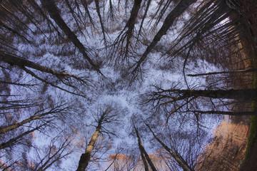 Cielo azzurro nel bosco