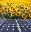 energia renovable girasoles 2-f15