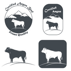 Angus Bull In White And Black.