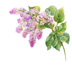 Spring lilac flowers on white background