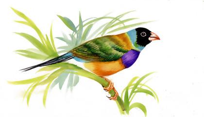 Wild bird on twig