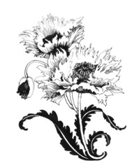 Poppy flowers illustration in black and white