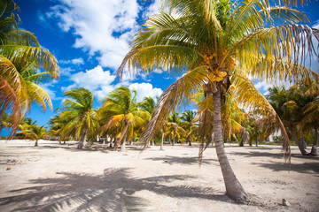 Palm grove on white sandy tropical beach at exotic country