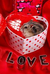 hamster for valentine