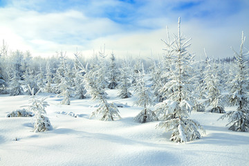 winter rural landscape with the forest  and blue sky