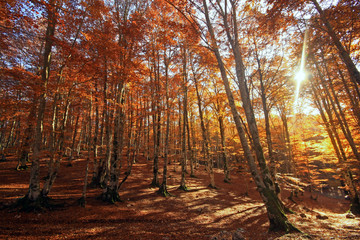 Sole tra gli alberi.... Aceri millecolori