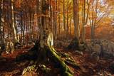 Tramonto nel bosco di aceri