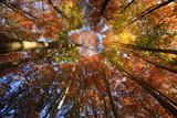 Aceri, mille colori