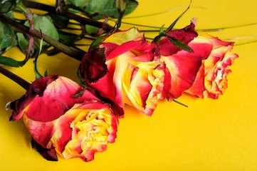 beauty, colors, fresh, flowers, romantic, roses,