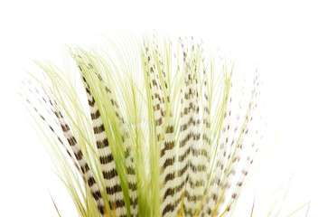 beautiful feather on white background. close-up