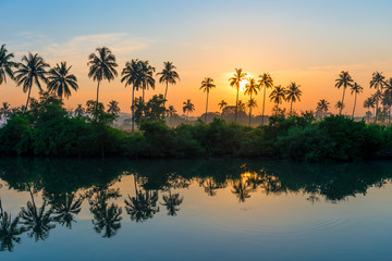 rows of palm trees reflected in a lake at dawn