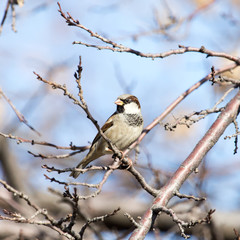 sparrow in nature