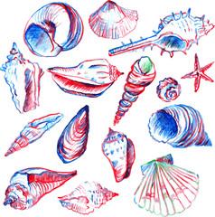 set of line drawing shells