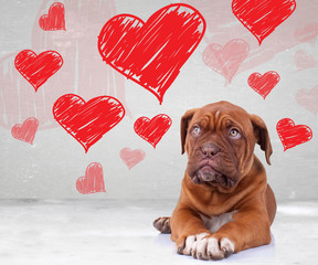 puppy looking up to heart shapes for valentine's day