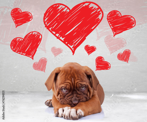 Fotobehang Hond shy love of a dog de bordeaux puppy