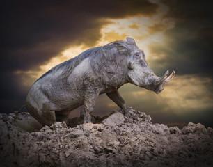 The Warthog (Phacochoerus africanus) in a mud.
