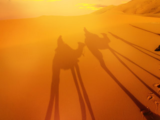 Desert landscape with camel shadow.