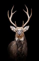 Deer on dark background