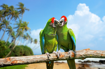 Parrot (Severe Macaw) on branch on tropical background