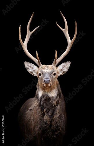 Poster Hert Deer on dark background