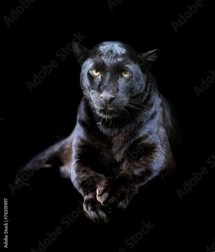 Canvas Luipaard Black leopard
