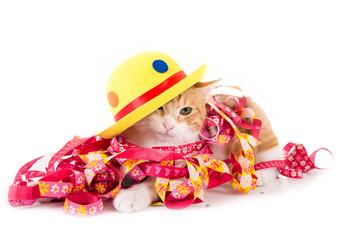 Faschingskatze mit Hut