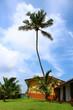 Постер, плакат: пальма на фоне неба в отеле Club Koggala Village