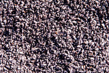 black variety of glutinous rice background