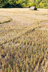 Rural field after the rice harvest at Mae Hong Son,Thailand.