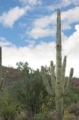 The Arizona Sonora Desert Museum South of Phoenix Arizona USA.