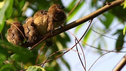 Sleepy Birds 4