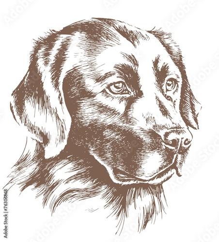 Fototapeta labrador head vector sketch