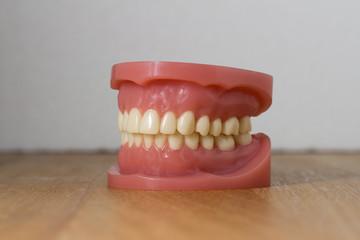 Set of artificial false teeth