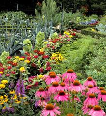 Bauerngarten; Roter, Sonnenhut, Garten;