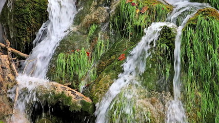 Water Cascade with Tree Trunk
