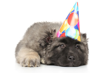 Sad Central Asian Shepherd puppy in party cone