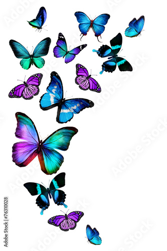 Many different butterflies, isolated on white background - 76310028