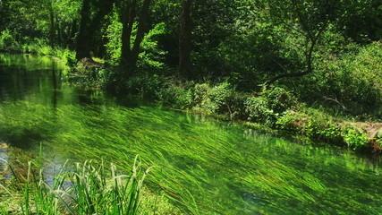 Krka River in forest