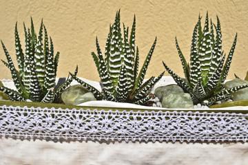 piante grasse 2