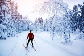 .Cross-country skiing in Sweden