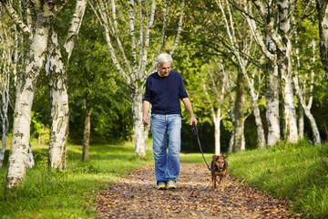 Bäume Weg Wald Mann Hund
