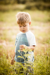 Toddler In The Meadow